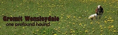 http://gromitwensleydale.blogspot.com/