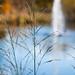 Autumn Splish Splash