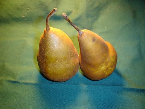 pears 002
