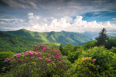 Southern Appalachian Scenic Landscape Asheville NC (johanhakanssonphotography) Tags: catawbarhododendron craggygardens craggypinnacle storm mtmitchell mountains sun sunset light spring season southernappalachians blueridgemountains blueridgeparkway appalachians hiking asheville northcarolina westernnorthcarolina lush green colors pink sky thunderstorm weather digitalphotography landscape johanhakanssonphotography nature outdoors outdoorphotographymagazine exploration canvas print media statepark parks nationalgeographic nationalforest pisgahnationalforest nationalparkservice usforestservicerangerstation usnationalparkservice blueridgecountry blueridge blueridgemountainlife parkway blueridgeparkwaydaily blue blooms flowers travel tranquil serene trees ourstatemagazine