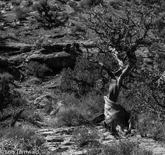 Desert Shadows in Monotones - HTMT (11Jewels) Tags: canon 18200 moabutah desert parkavenuetrail archesnationalpark utah tremendoustreetuesday monotones