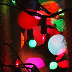 Christmas #29 (kevin dooley) Tags: christmas xmas light arizona cactus holiday southwest silhouette lightbulb closeup bulb cacti canon hair 50mm desert bokeh f14 14 az explore string chandler merrychristmas cactuses merryxmas christmaslight lightstring 40d cactushair