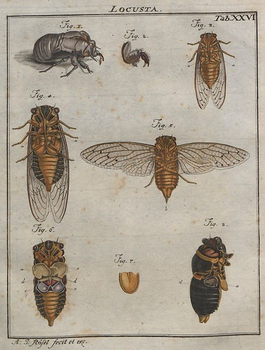 Locusta V.2
