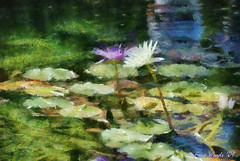 Water Lily, Dallas Arboretum - photo art (bhojman) Tags: dallas texas waterlily arboretum photoart dap photopainting