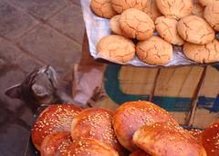 Goloso (Cyberian8) Tags: africa animal fauna favoriten favorites morocco favourites favoritas marrakech favourite animaux diere marruecos favorita marroc  tier  favorit favoriter djur  preferida  hayvan  desanimaux favoris    hewan haiwan reinoanimal  ivotinja   sk kegemaran   gunstelinge
