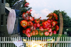 2009_doubles_11 (Ramune Rastonis) Tags: film vegetables virginia lomography experimental doubleexposure fisheye kodakhd400