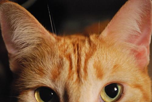 Klaus Up Close by MHorama.