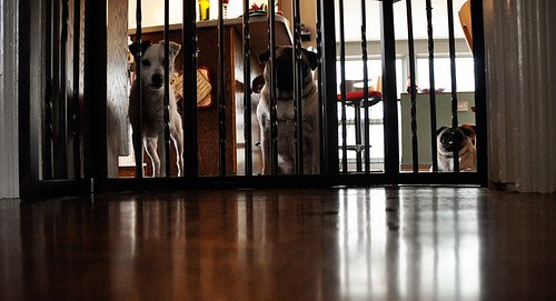 pups on parole.