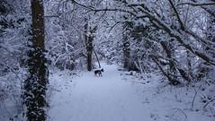 DSC04121 (edwardsgt) Tags: snow january tring 2010