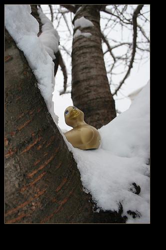 Plastic Duck!