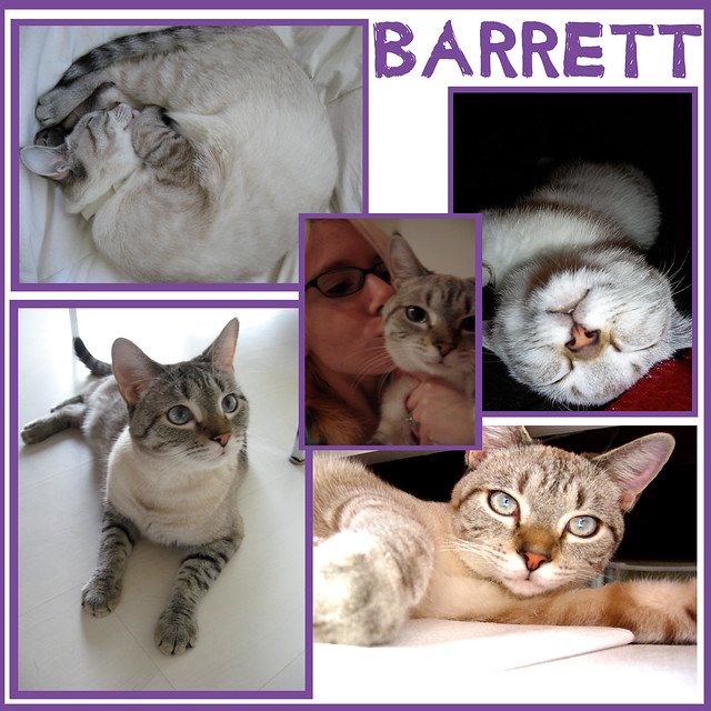 Barrett Collage