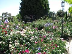 Garden of Kelvin & Melanie Trimper