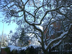 tree decorated with snow