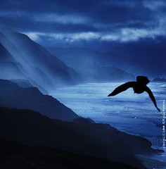 soar (louie imaging) Tags: ocean sf california mist storm bird rain fog america bay coast fly flying waterfall high san francisco waves pacific magic romance cliffs coastal area romantic mystical soaring majestic jazzy soar fogfall romantism mygearandmepremium mygearandmebronze fogwaterfall