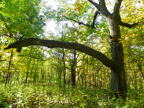 Autumn in Swallow Cliff Woods (Cook County Forest Preserve), Palos Park, IL  (12)