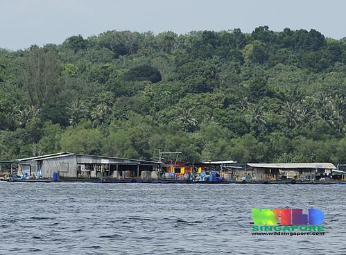 Fish farm off Chek Jawa, Pulau Ubin