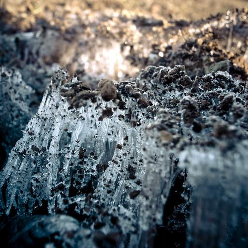 Ice Fungi 2
