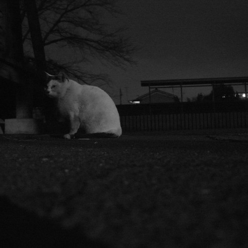 Today's Cat@2010-01-15