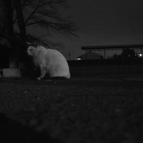 Today's Cat@2010-01-15