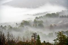 Brumas (airojo) Tags: wood snow tree fog landscape spain segovia montain embrujo valsaín eos450d