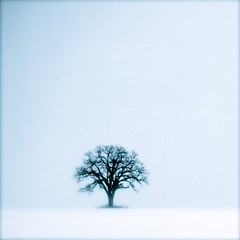 Another of my single tree (Jamshid Tajdolat) Tags: winter snow ontario canada tree markham jamshid pentaxk10d jamshidtajdolat jmshid tajdolat