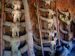 Mithun house decoration (Linda DV) Tags: people tribe 2008 sevensisters tribo stam naga nagaland tribu stamm  trib trib 7sisters heimo northeastindia stamme pokolenia konyak   lindadevolder  plemena pokolen    thendu