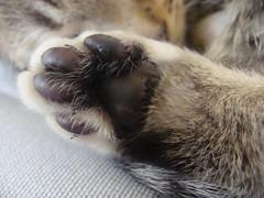 Mucky Footsie (Izzi :)) Tags: cats cat kitty kitties