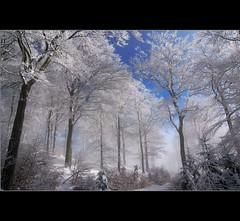 Winterwonderland (motivsucher) Tags: wood schnee winter snow cold fog forest nebel hoarfrost kalt wald raureif sauerland niedersfeld clemensberg theunforgettablepictures wonderworldgallery