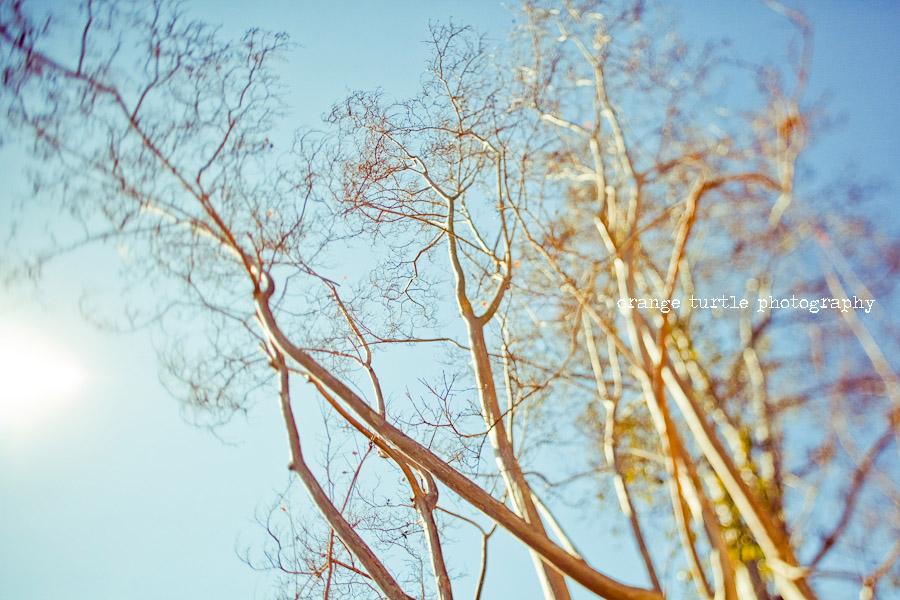 ts-trees-103