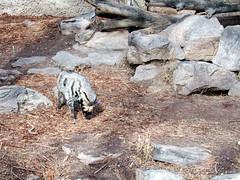 Zoo of Denver  DSCN0060