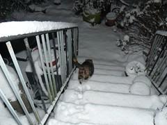 Katze im Schnee3