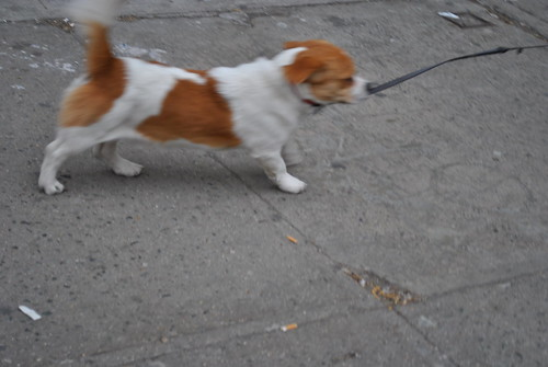 Cute Frigging Dog - Lower East Side - Manhattan