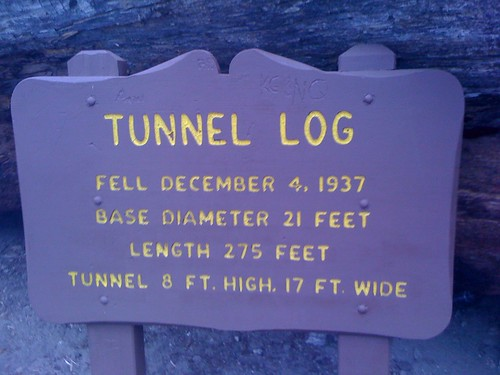 Tunnel Log board at Sequoia National Forest