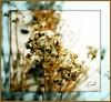 Winter Chives (Lynn English) Tags: yard impressedbeauty impressedbyyourbeauty garlicchiveseeds