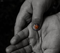 Ladybod! (Fishfingers & Custard) Tags: colour handy hands hand sony fingers  pop corona ladybird a3 fizzy selective wherediditallgowrong showingmyage moneybackonbottles paidtorecycle