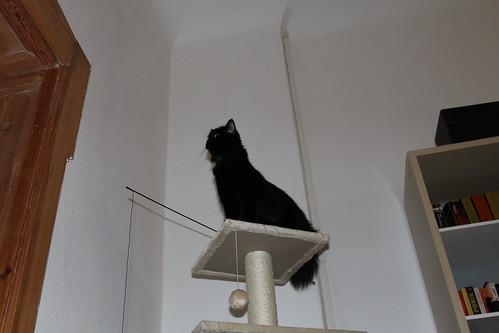 Bebbie erkundet die Wohnung