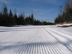 IMG_5289 (Airport Nordic Ski Club Gander) Tags: ski club newfoundland airport skiing trails nordic lighted gander crosscountryski