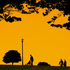 A walk in the park (Darwin Bell) Tags: park sky people orange tree silhouette san francisco explore alamosquare sfist artofimages bestcapturesaoi magicunicornverybest magicunicornmasterpiece elitegalleryaoi mygearandmepremium mygearandmebronze