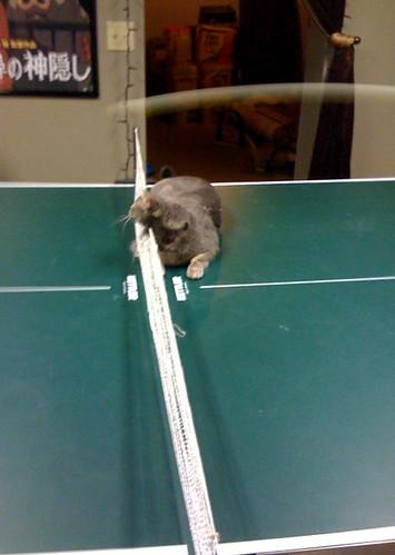 Ping Pong Cat - Me