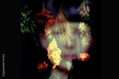 the woman in the window (japanese forms) Tags: flowers woman window composite fleurs femme photomontage murder fenêtre filmnoir fritzlang unknownperson joanbennet raymondmassey edwardgrobinson danduryea thewomaninthewindow ©japaneseforms2010 sexualrepresion