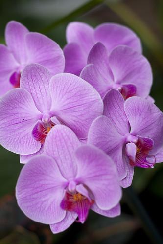 white river garden orchids.