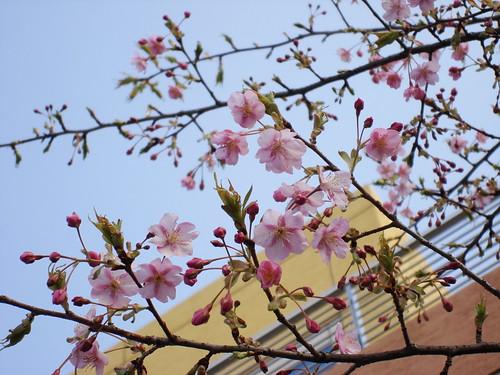 2010-02-18 東京之旅第四天 149