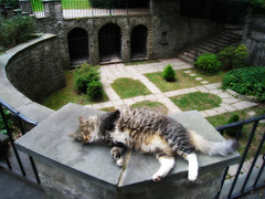 ME!!!ow (icolorinthelines) Tags: new york ny building architecture cat historic rochester rochesterny sunkengarden warnercastle