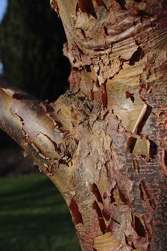 Tree bark - lovely colours.