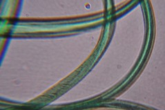 DSC_0503 (John Aho) Tags: microscopy hiddenworld nikond90 lietzmicroscope