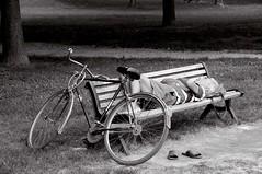 PANCHINA RIPOSANTE (carmine gargiulo) Tags: possum bench log crash sleep slumber fast kip snooze rough asleep laurel sleepover bicicletta doss