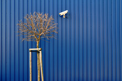 still watching (Heidelknips) Tags: winter tree ikea wall watching security d90
