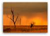 PRAIRIE DUSK (Eye Of The Artist - I'M BACK) Tags: nature southdakota nikon prairie uppermidwest durfeefl dragondaggerphoto zuzkasfaves yourwonderland artmeetsphotography wonderlandlandscapes eyeoftheartistcom