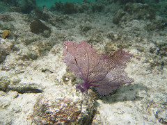 CMBUnderwater-0434 (~Picturing the World~) Tags: underwater caymans