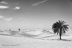 HDR - Black Desert (Azaga ) Tags: life africa white black dan nature canon photography desert photos best palm ibrahim libya tripoli hun        sabha     of    jafra      aezagp
